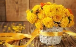 Желтые хризантемы к чему дарят