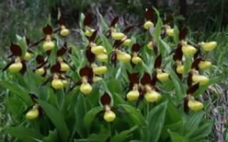 Дикая орхидея цветы