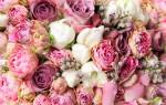 Цветы похожие на розы