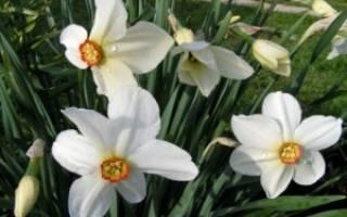 Большие белые цветы