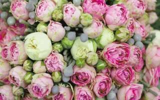 Пионовидные розы розовые