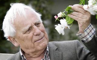 Плетистые розы дэвида остина