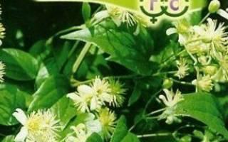 Клематис из семян в домашних условиях