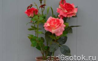 Сорта комнатных роз