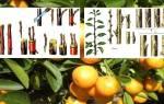 Как привить мандарин