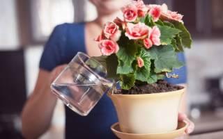 Подкормка для домашних цветов в домашних условиях