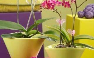 Можно ли сажать орхидею в непрозрачный горшок