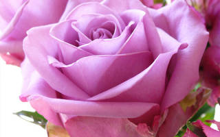 Розы в букете с чем сочетать