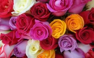 Значение роз по цвету