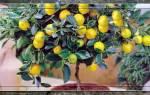 Как ухаживать за домашним лимоном