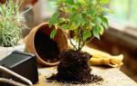 Благоприятные дни для посадки комнатных растений