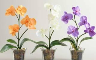 Какой нужен горшок для орхидеи