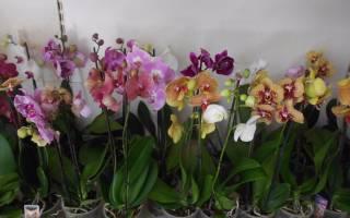 Как выбрать орхидею