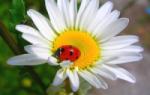 Папоротник в саду