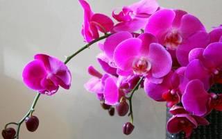 Почему у орхидеи опадают бутоны нераспустившиеся