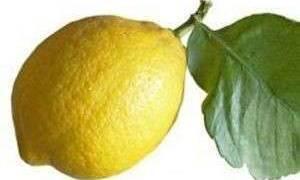Что делать если я лимон