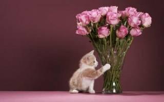 Как сохранить букет роз