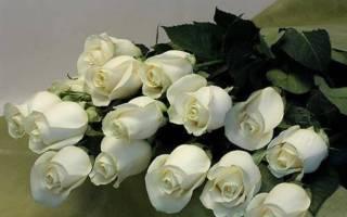 К чему дарят белые розы девушке