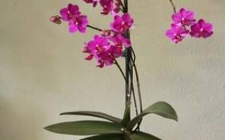 Какая земля нужна для орхидеи