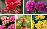 Декоративные домашние цветы