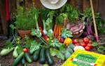 Полив растений дрожжами
