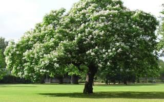 Дерево с висюльками