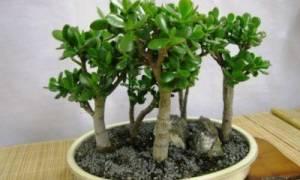 Не растет денежное дерево что делать