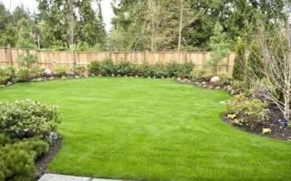 Как сеять газонную траву