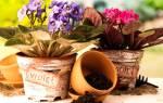 Лунный календарь для пересадки комнатных цветов