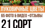 Цветочные луковицы