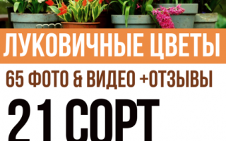Цветы луковичные для сада