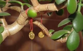 Как выглядит денежное дерево