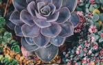 Суккуленты флорариум