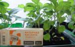 Янтарная кислота для растений инструкция