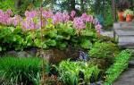 Цветы которые любят тень в саду