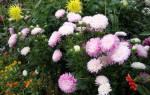 Что цветет в августе