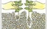 Как правильно посадить растения в аквариуме