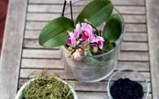 Орхидея перестала цвести что делать
