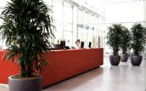 Офисные цветы каталог с фотографиями и названиями