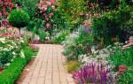 Розовые мелкие цветочки
