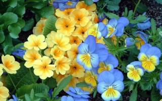 Домашние цветы по знаку зодиака