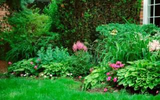 Тенелюбивые кустарники для сада многолетние