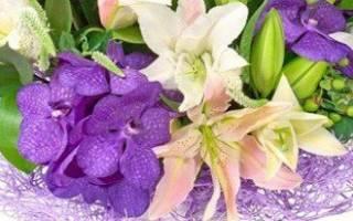 Лилия фиолетовая