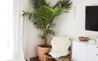 Как ухаживать за домашней пальмой