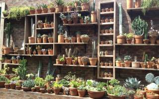 Кашпо для кактусов